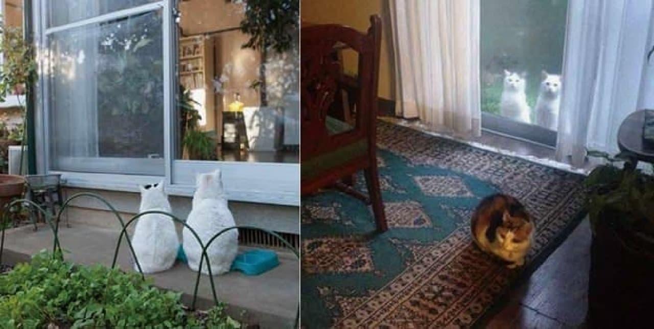 「庭猫」のアフとサブ(写真左)と、安彦さんの家に住む「家ネコ」(写真右、手前)