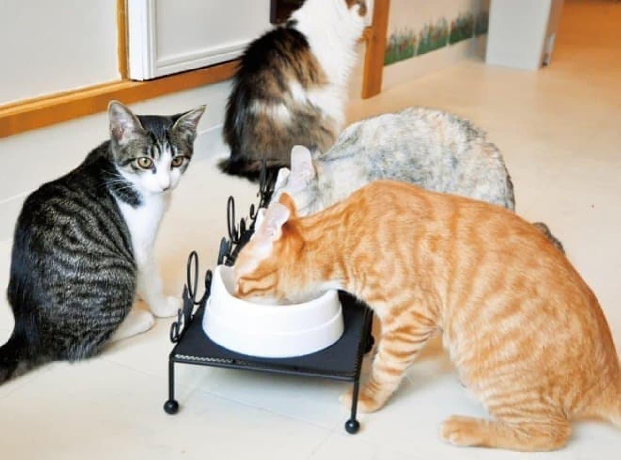 テーブルがあると、食べやすいニャ!
