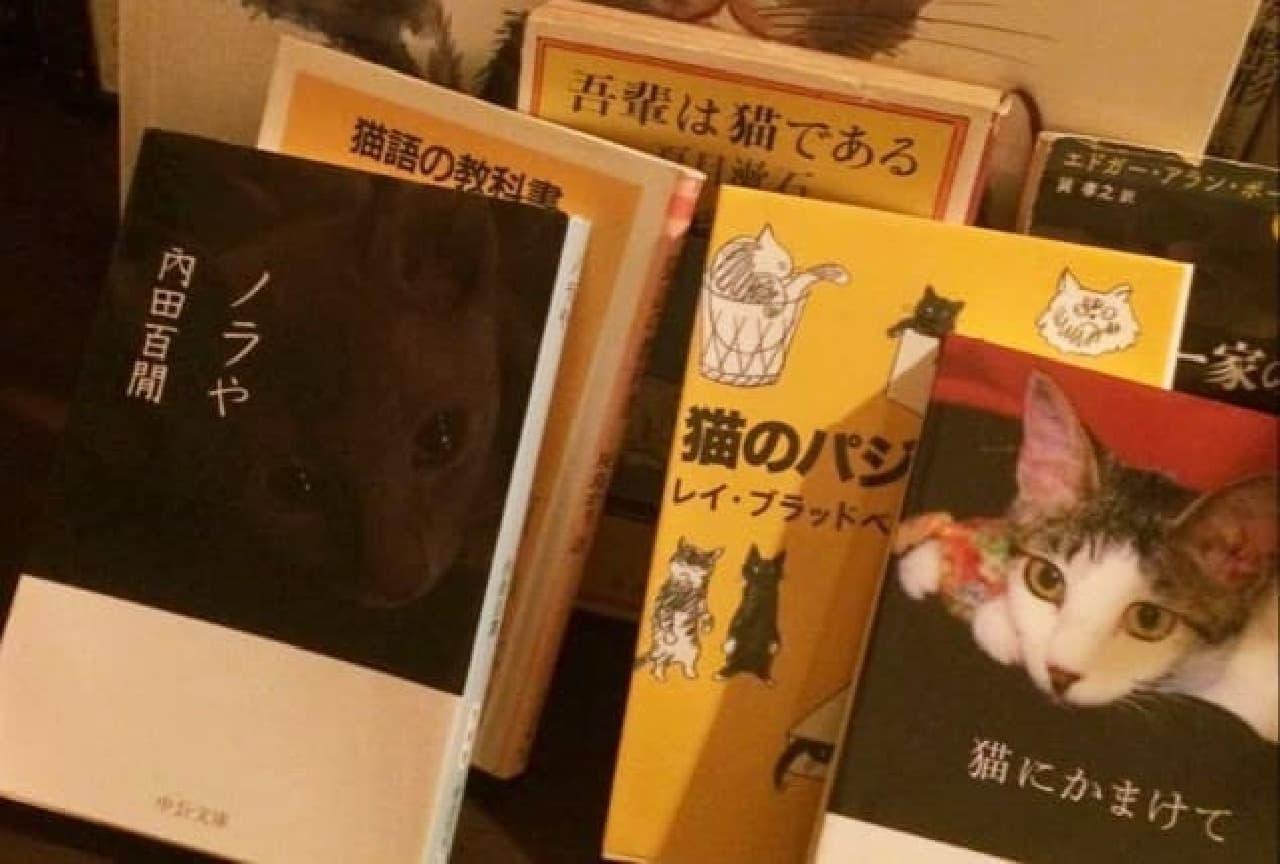 ネコ文学が読めるバーがオープン