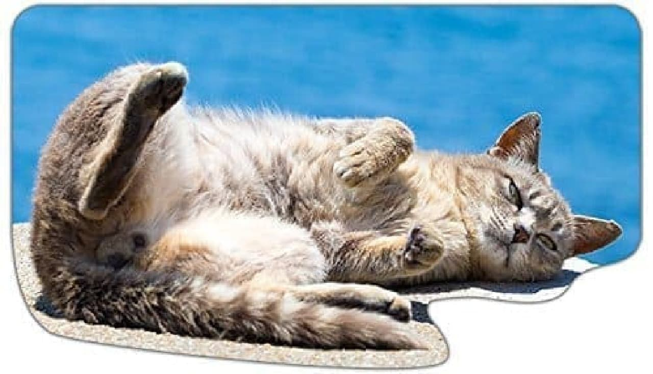 「ごろんネコと海」  ごろ~ん