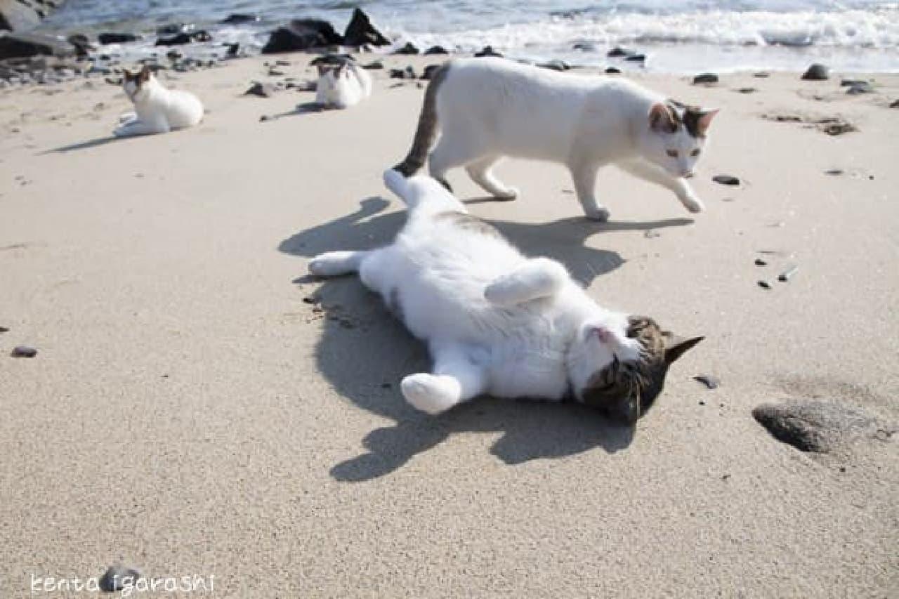 離島のネコ写真もあります