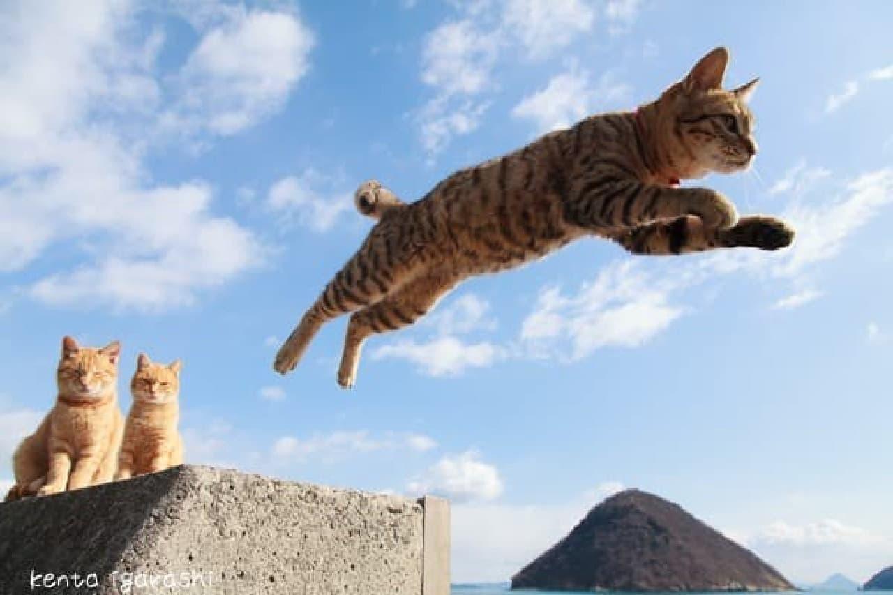 五十嵐健太さんの「飛び猫 写真展」開催
