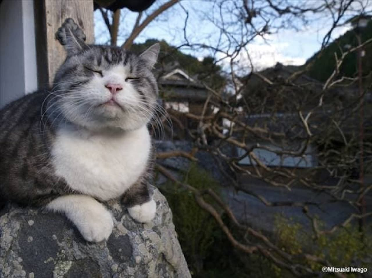 年末年始はネコさんに癒されよう