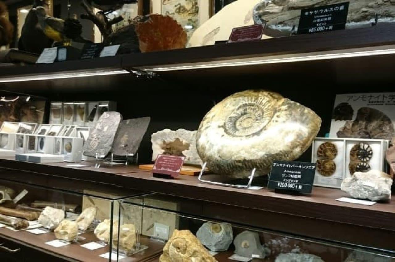 化石や鉱物などが並ぶ「Naturalis Historia~ナチュラルヒストリエ」(書籍館4階)  (出典:三省堂書店公式サイト)