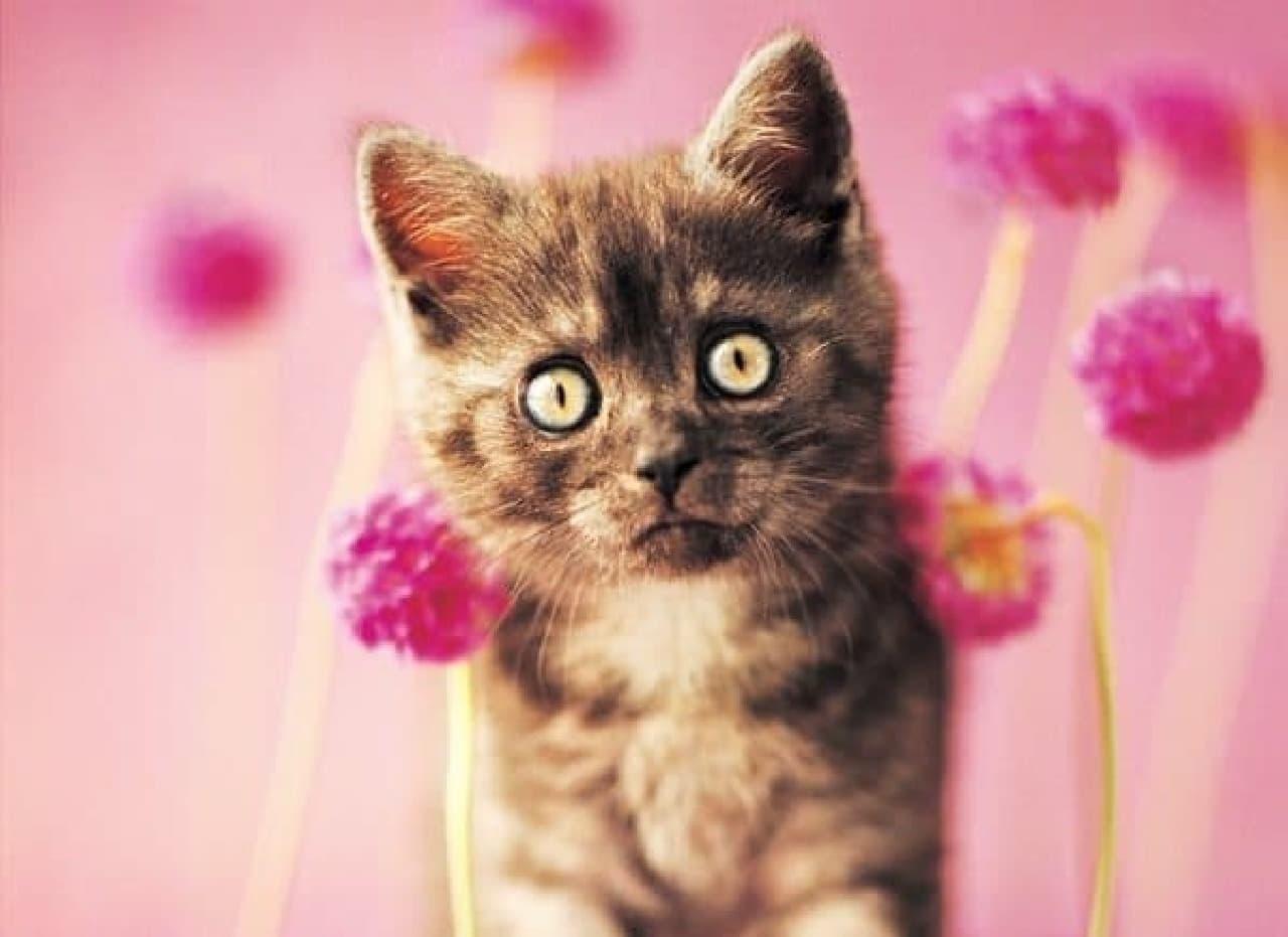 写真集『世界の美しい猫101』発売