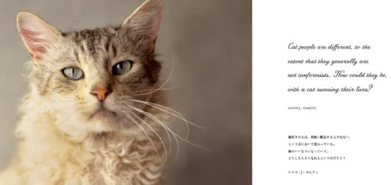 こちらはネコに関する名言の例  ネコ好きは体制の言いなりにはならないのに  ネコのいいなりになるのはなぜ?とあります