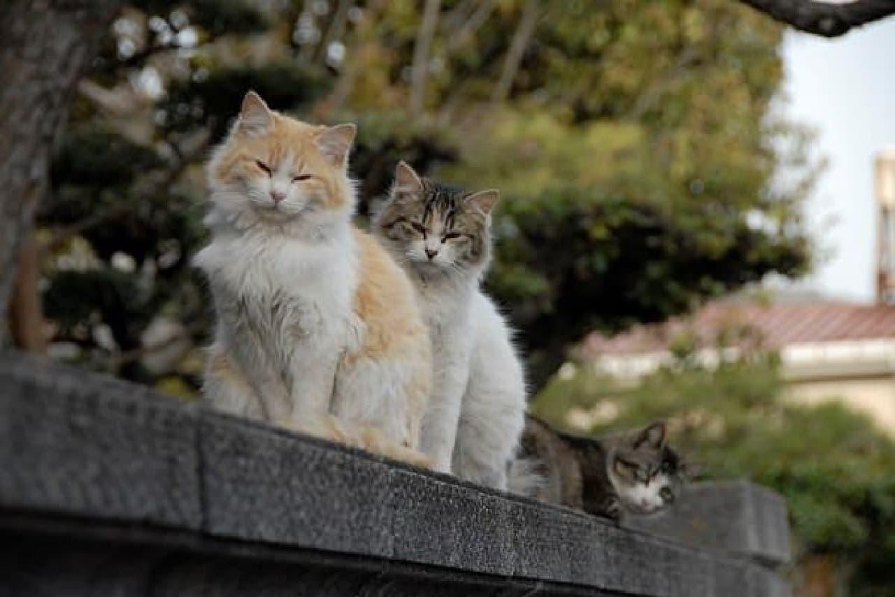街で暮らすネコたちや