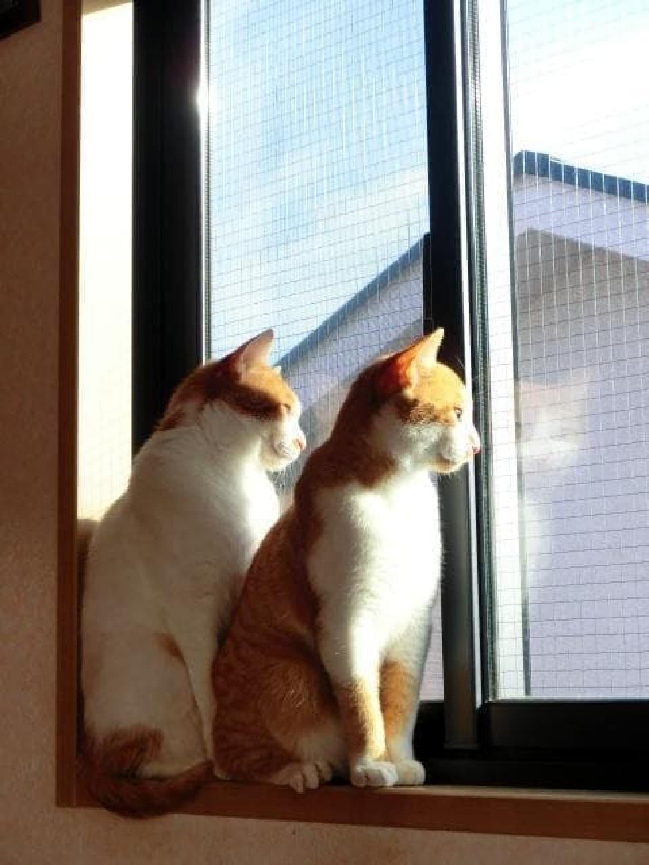 ネコ専用アパート、うらやましいニャ  (注:画像はイメージです)