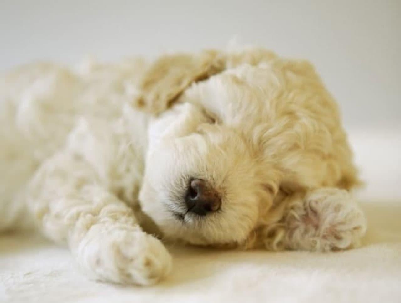 愛犬と一緒に宿泊できる温泉リゾート「愛犬お宿 伊豆高原」オープン