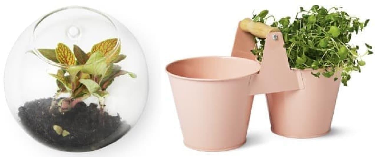 春はグリーンもオシャレに取り入れたい  (左)壁掛けの花瓶 400円、(右)バケツ 600円