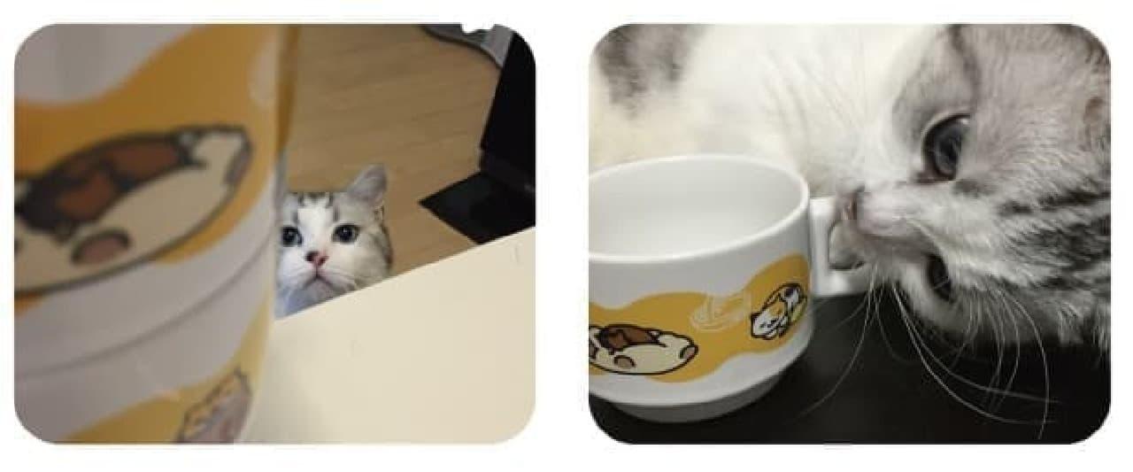 本物のネコも嫉妬するかわいさ!?