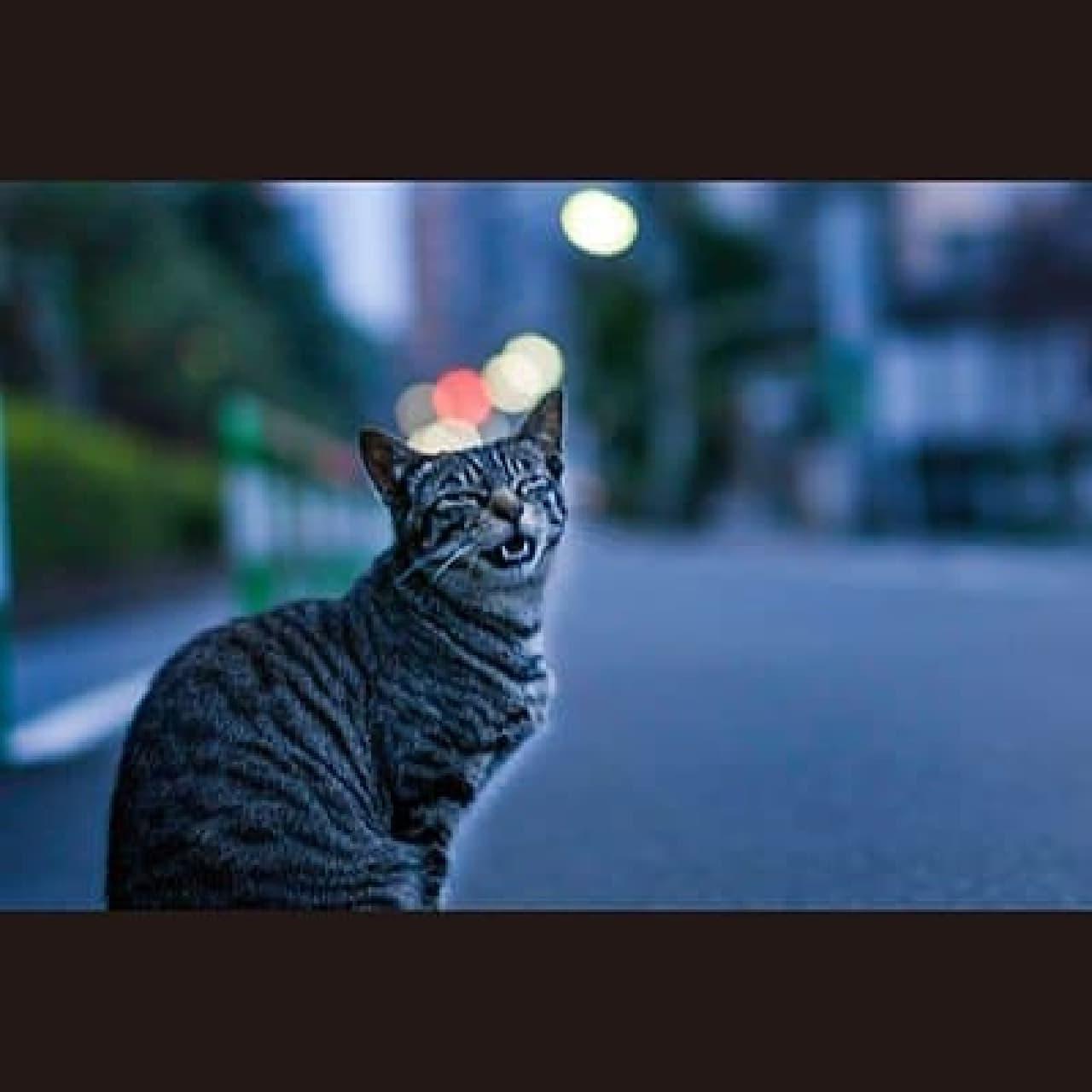 野良ネコと町、人を撮影している写真家集団「東京猫色」