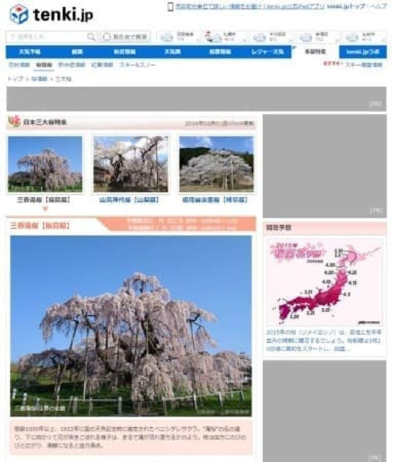 「日本三大桜」特集イメージ  観光の参考に