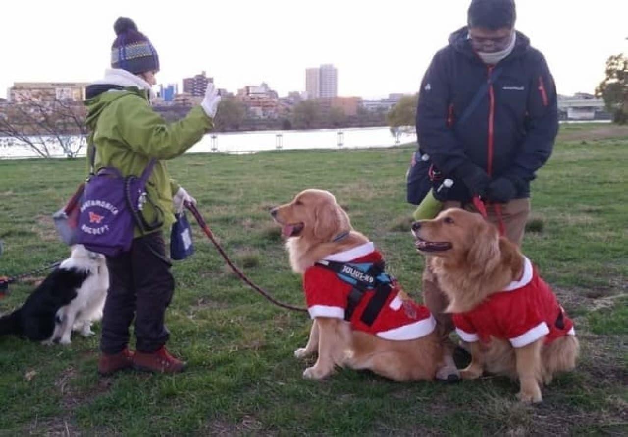 大型犬飼育可能、多頭飼いもOK!