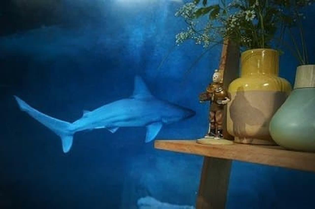 サメは寝ないんだって!