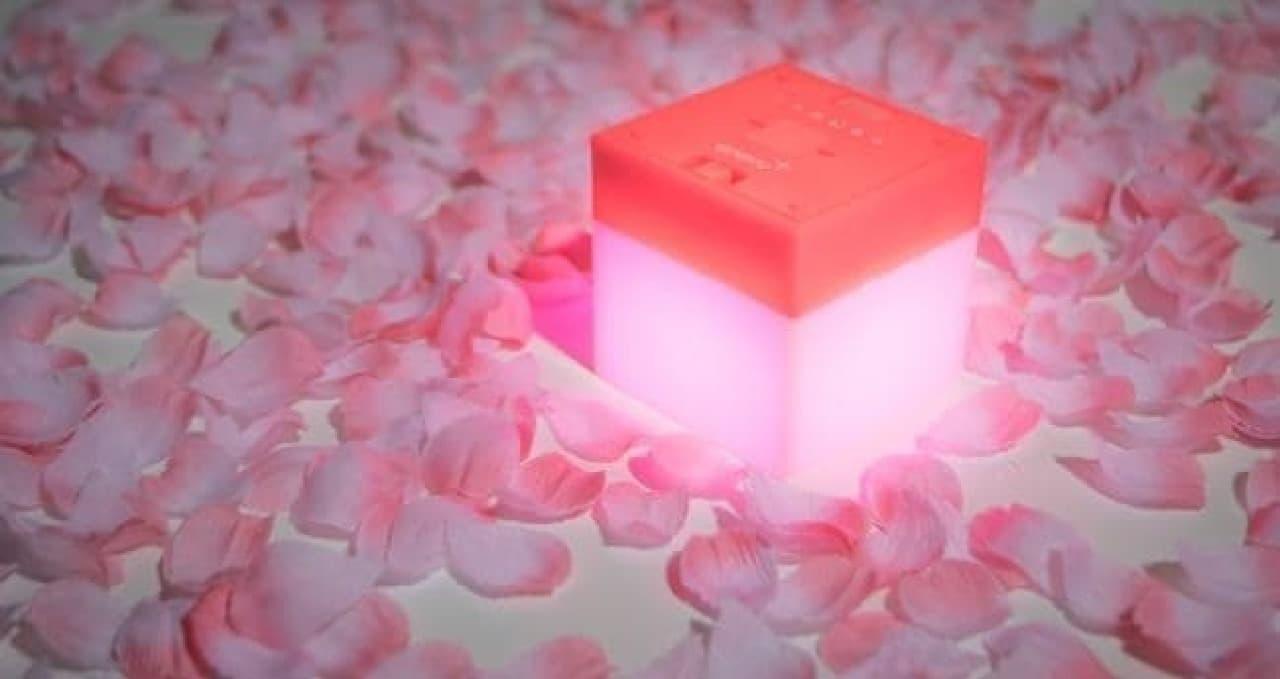 夜桜を彩るおぼろげな明かり
