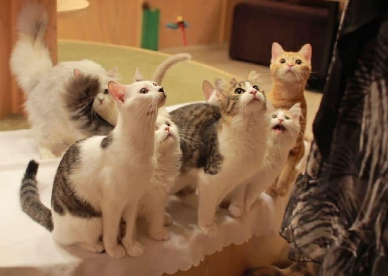 おやつでネコたちの人気者に!  (画像は池袋店)