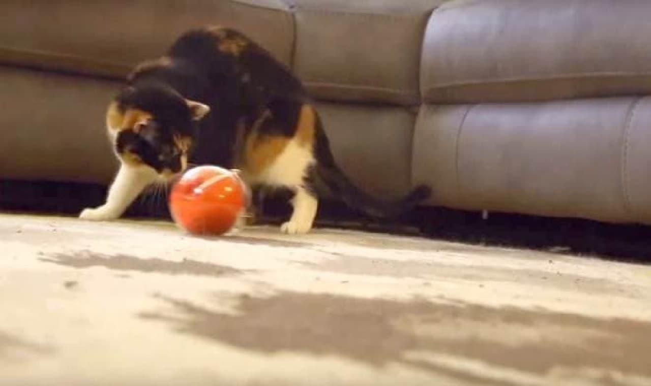 ネコだって、動くボールは気になる!