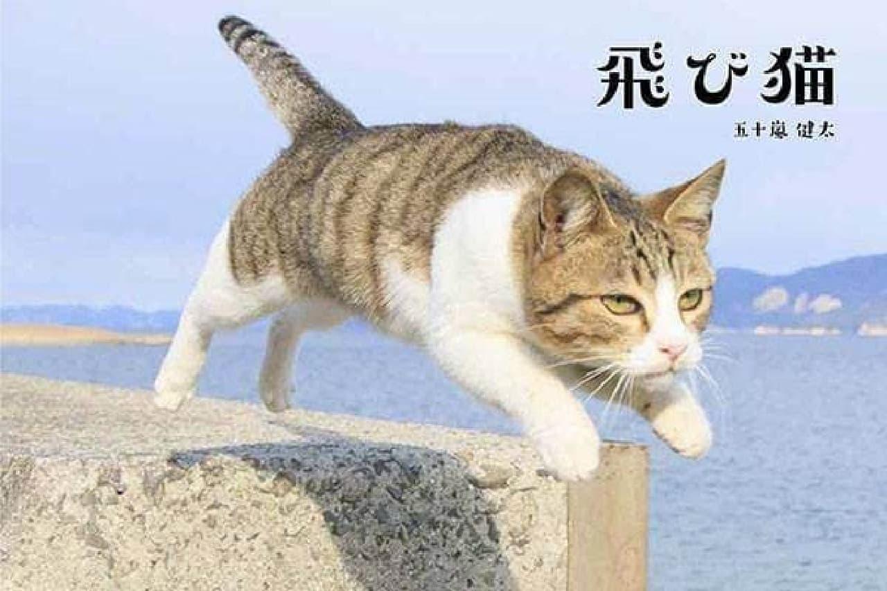 札幌エスタ7階を「飛び猫」がジャック