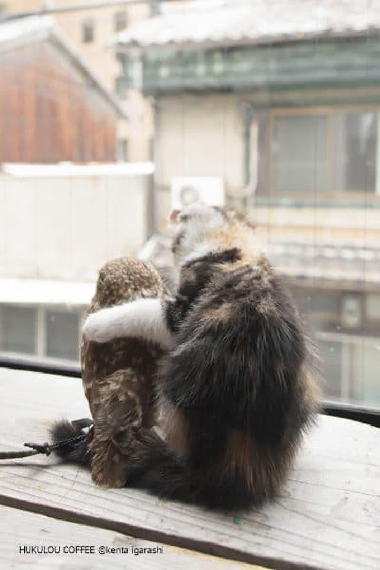 「フクとマリモ」の写真展示も