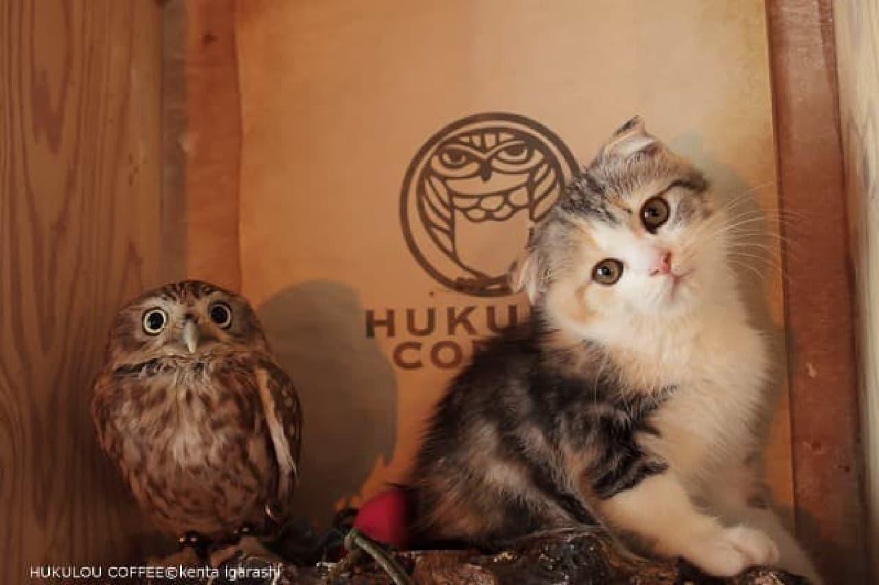 『ペット王国』内で、飛び猫・フクとマリモの写真展示