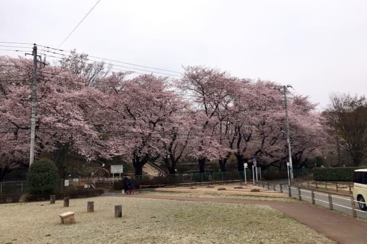 ちょうど桜が咲いた頃だったので、散策もしやすかった