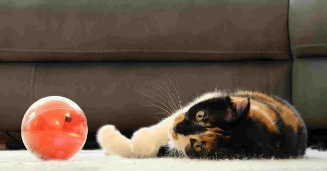 ペットも「PlayDate」を発見!