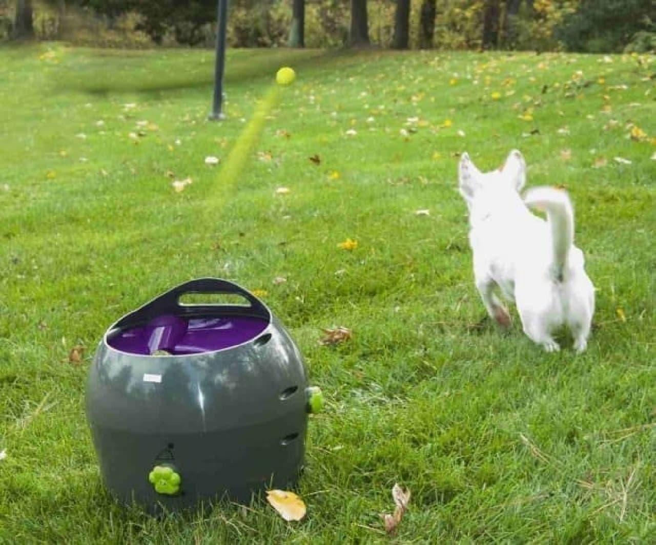 飼い主に変わってボールを投げる「Automatic Ball Launcher」