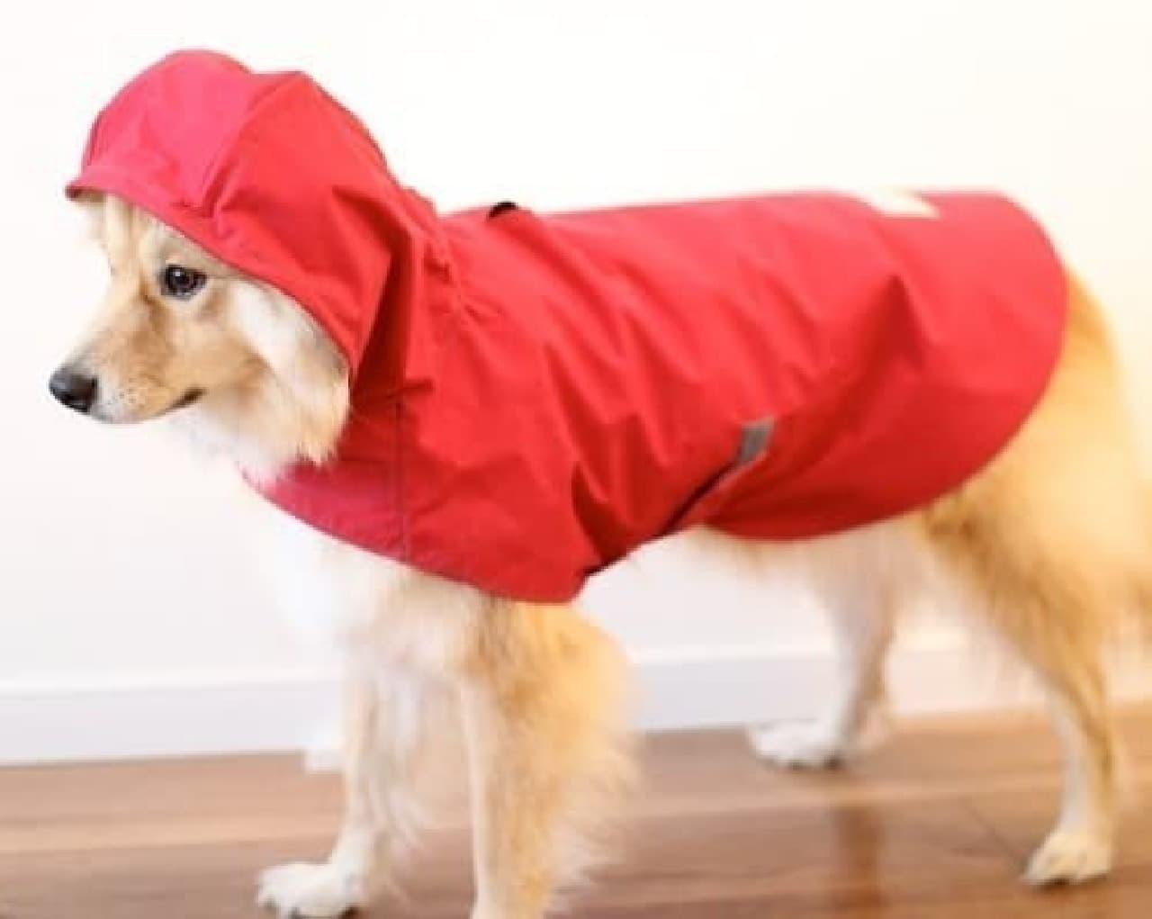 もうじき、梅雨ですね…。