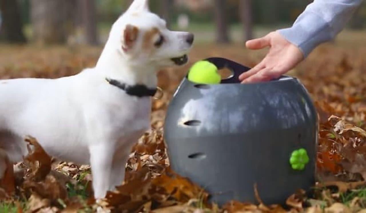 犬がボールを「Automatic Ball Launcher」内に戻したら、