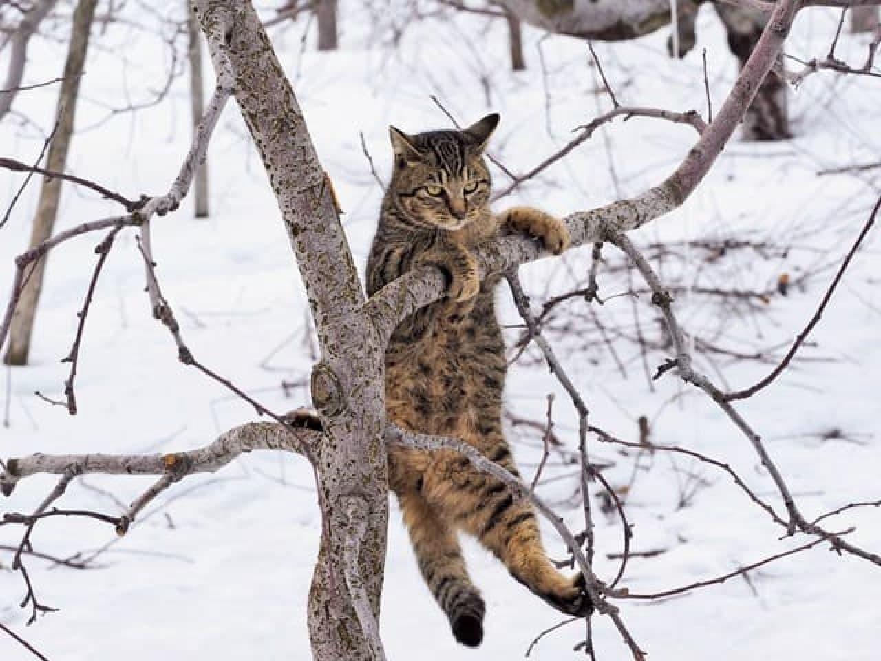 岩合光昭さんの写真展「ふるさとのねこ」冬:懸垂する(?)ネコ