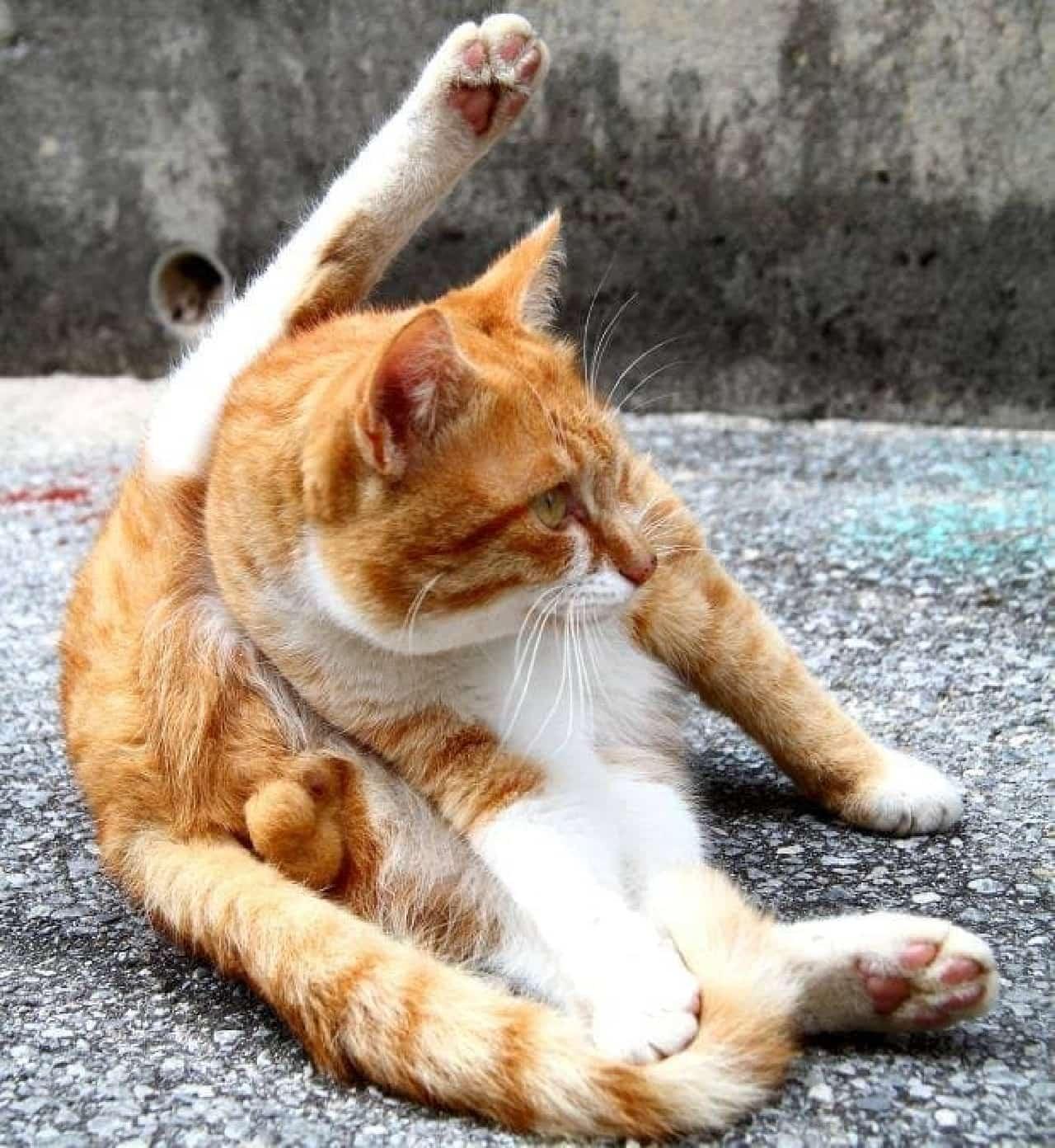 ネコの様々な魅力の例