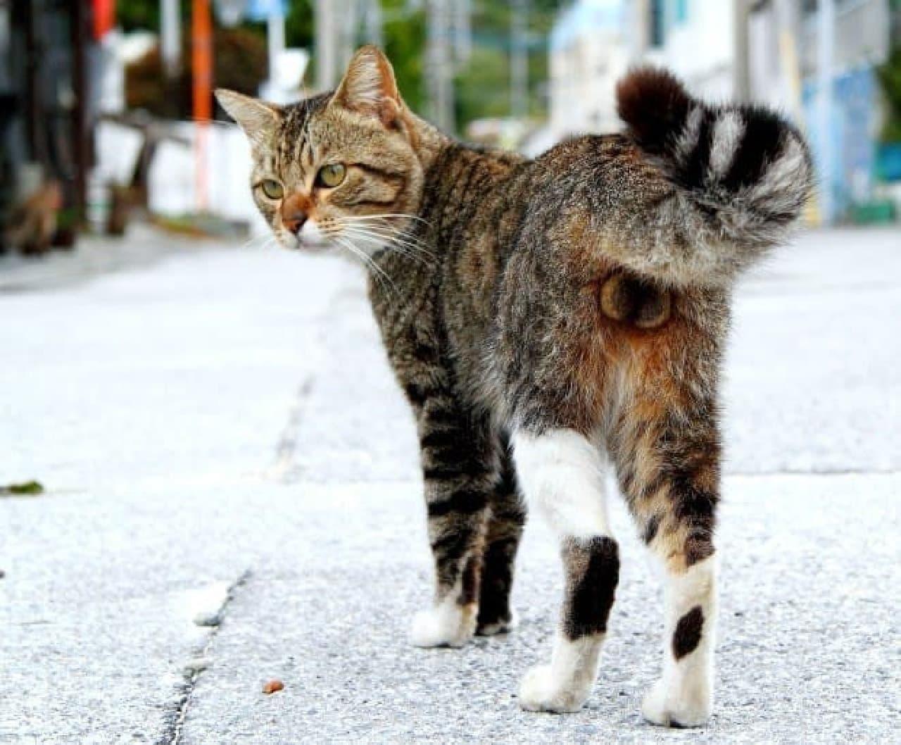 ネコのたまたまだけを撮影した写真集「にゃんたま」