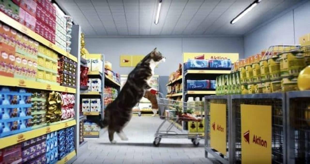 ドイツのスーパーが製作した動画:ネコのお買いもの