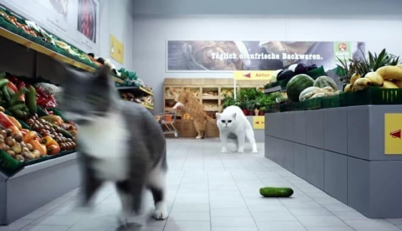 ドイツのスーパーが製作した動画:きゅうりを見ると驚くネコの習性を描く