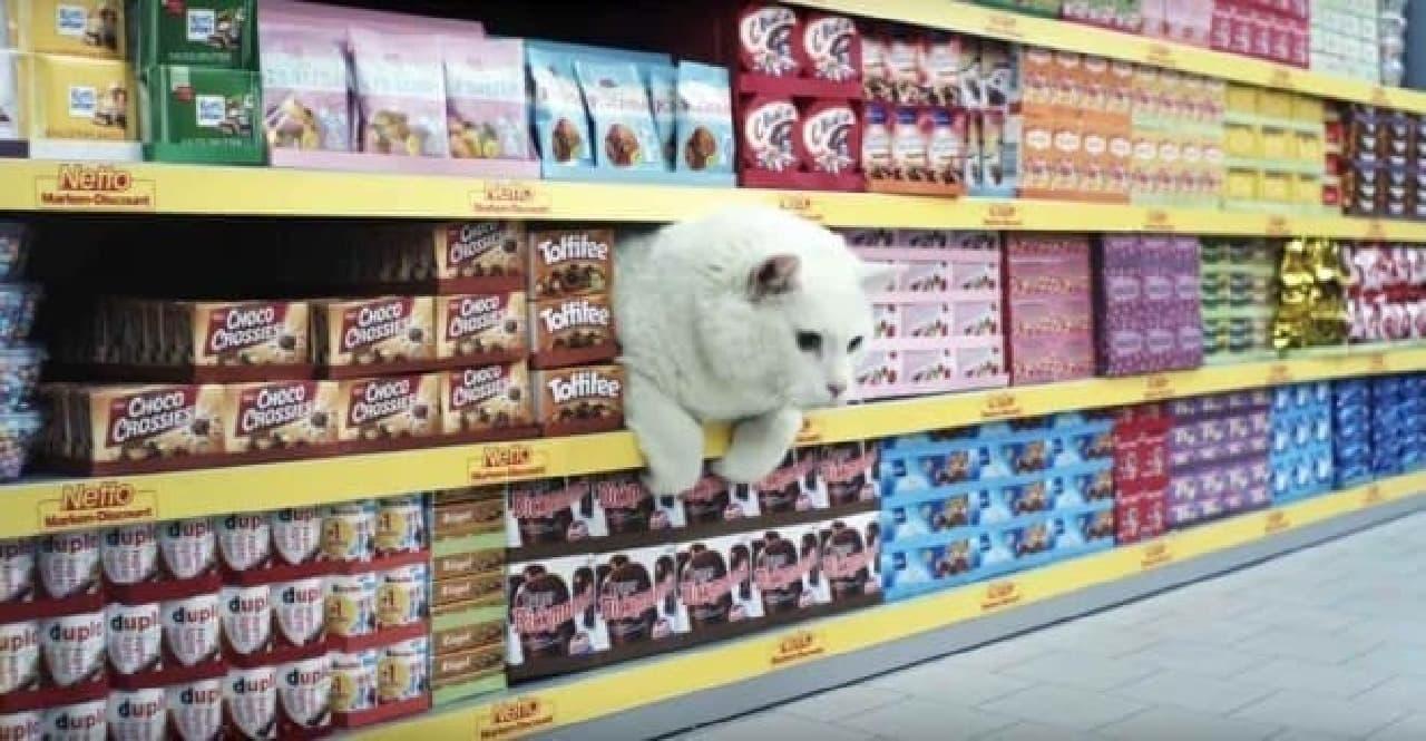 ドイツのスーパーが製作した動画:狭いところにもぐるネコの習性を描く