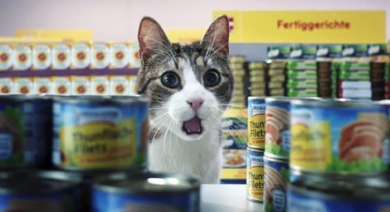 ネコがスーパーでお買い物!―ドイツのスーパーが製作した動画がカワイイ!