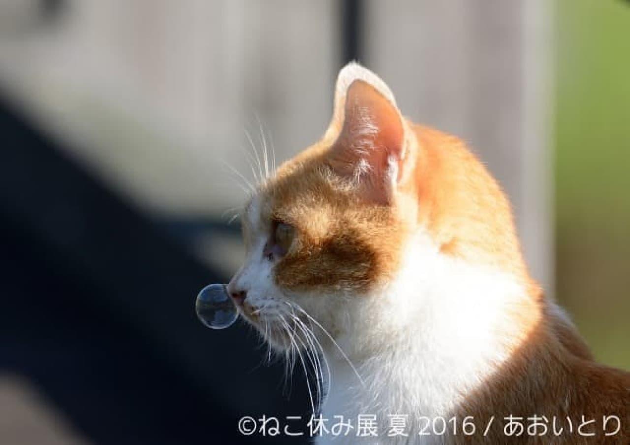 あおいとりさんの猫写真『猫だって鼻提灯くらいできるもん。』