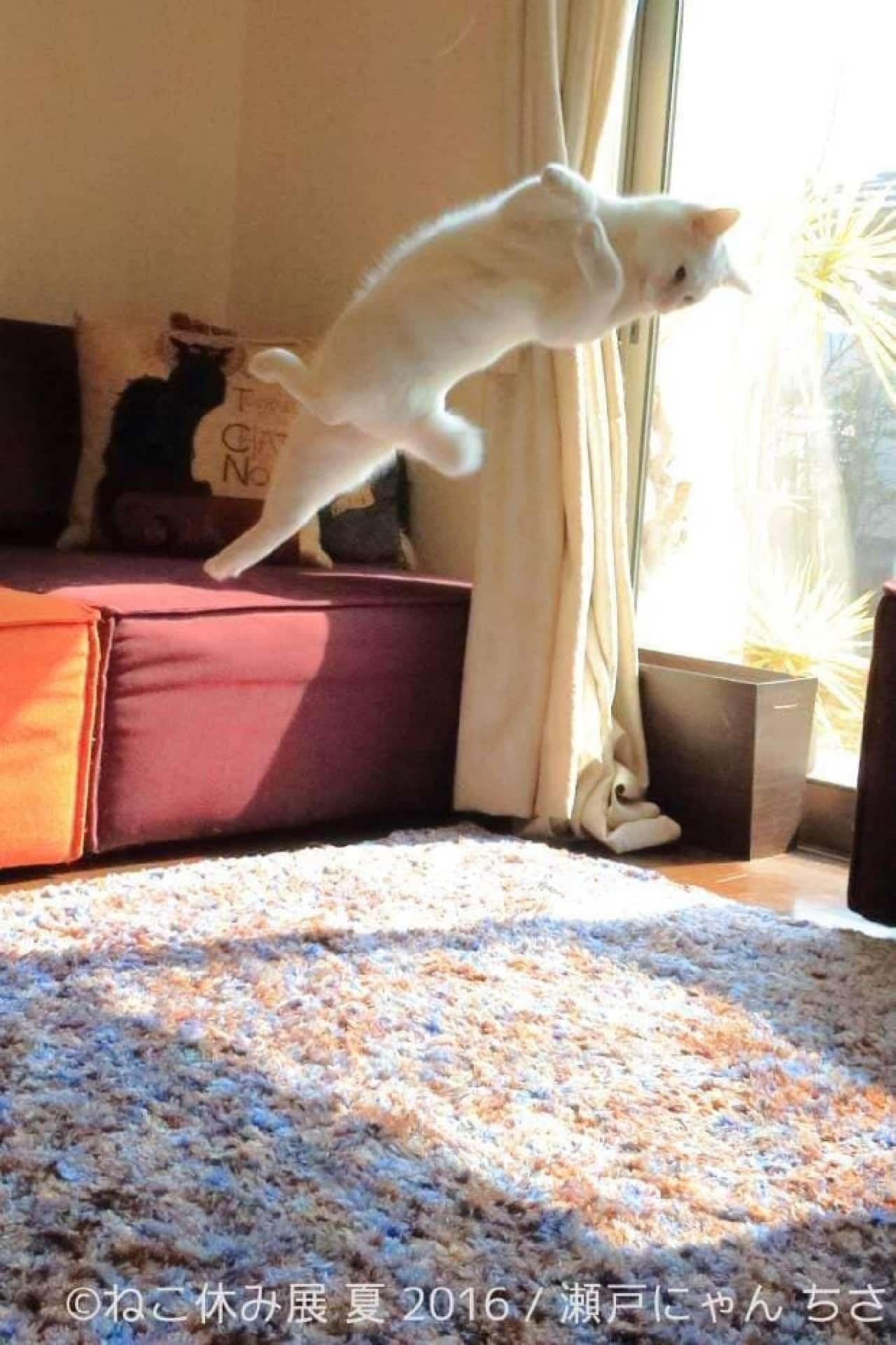 「無重力猫 とびっきり ミルコ!」を出版される瀬戸にゃん ちささんの写真