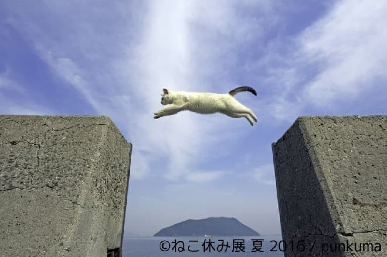 punkumaさんのネコ写真