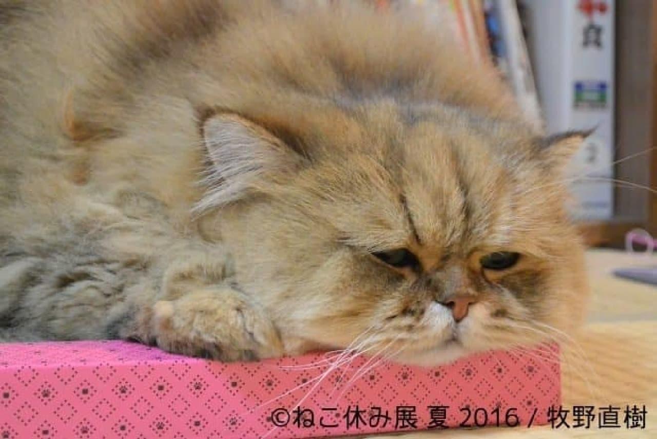 牧野直樹さんの写真「ふーちゃん」