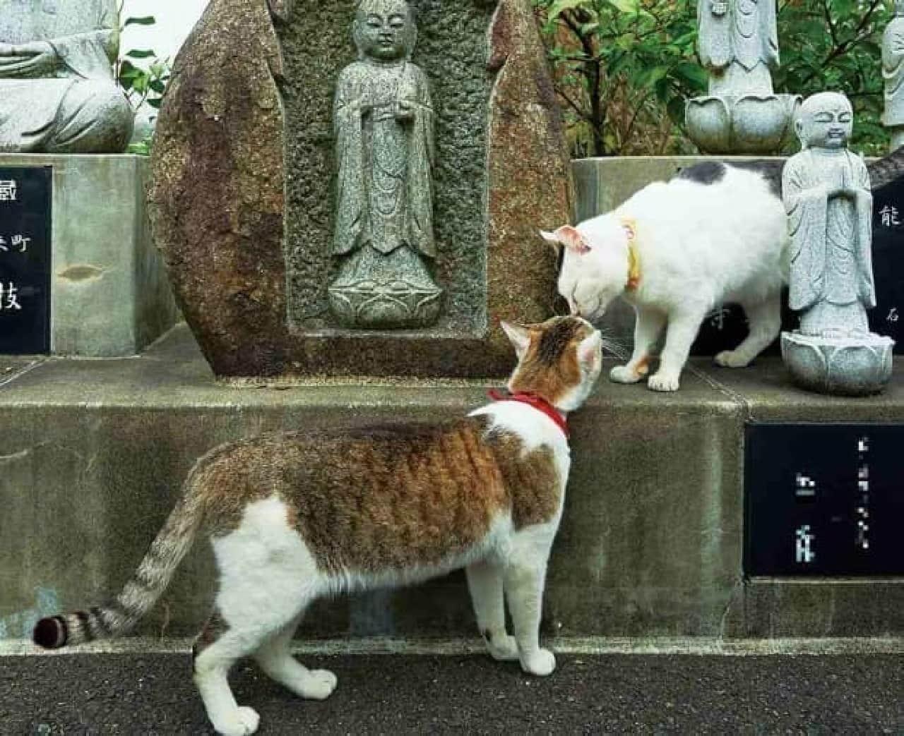 『寺ねこDAYS ねこはなやまニャい』の舞台となった「御誕生寺(ごたんじょうじ)」