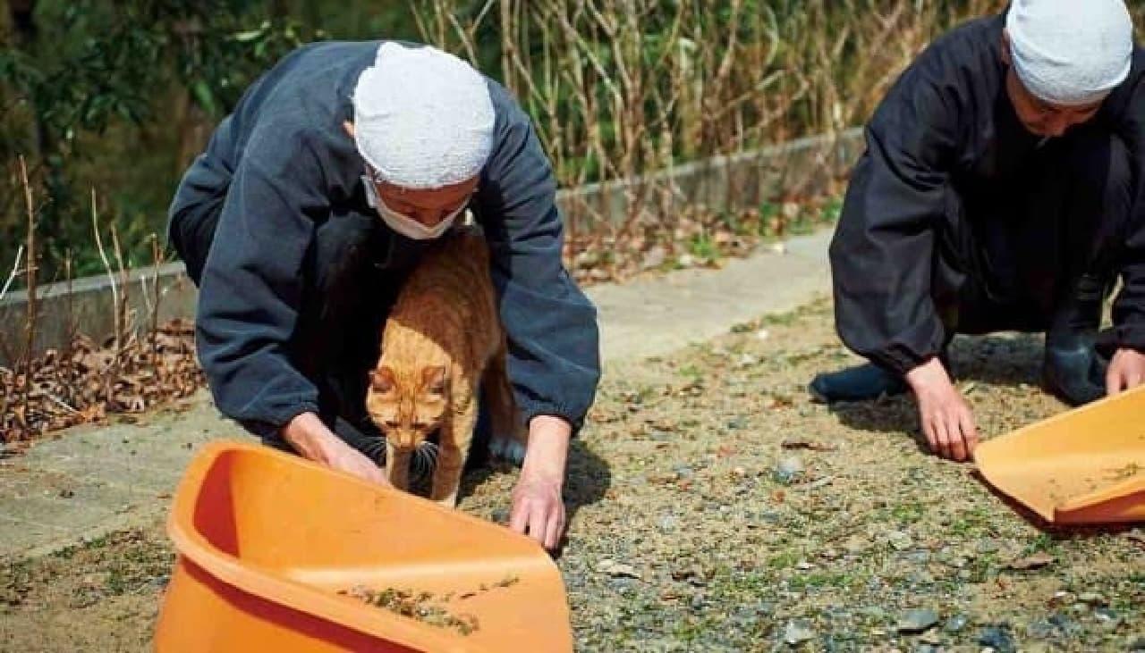 御誕生寺では、ネコの世話は修行の一環
