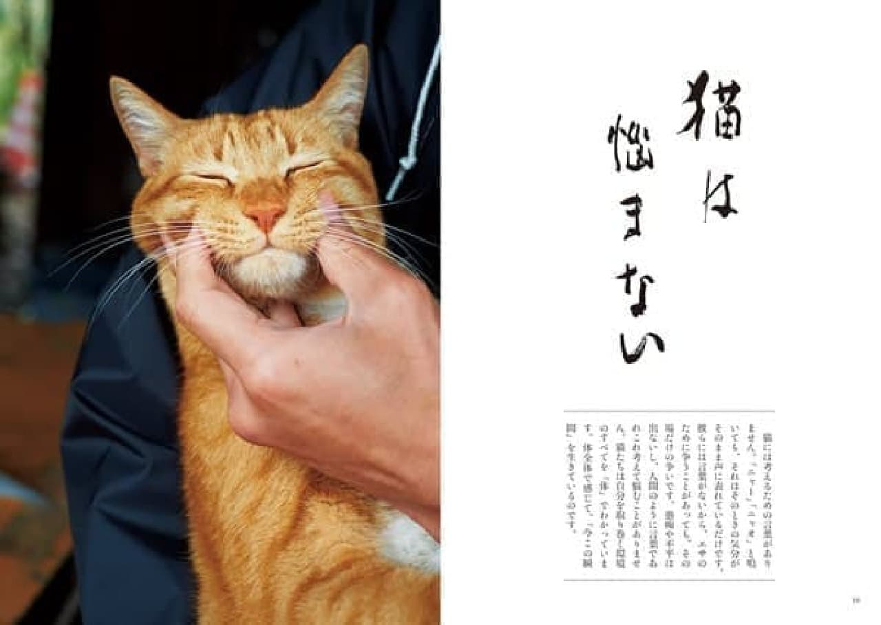 『寺ねこDAYS ねこはなやまニャい』サンプルページ