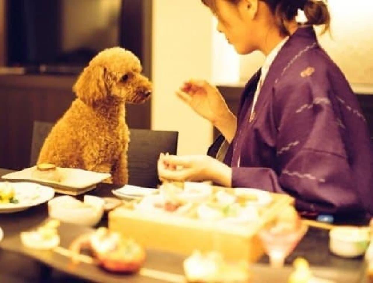 「D+KIRISHIMA」で「愛犬の厄払いプラン」提供開始