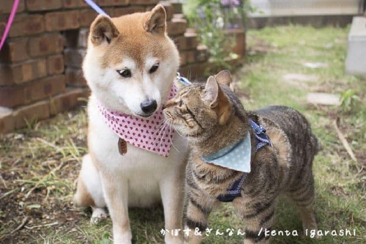 五十嵐健太さん主催ネコイベント「ねこ専」