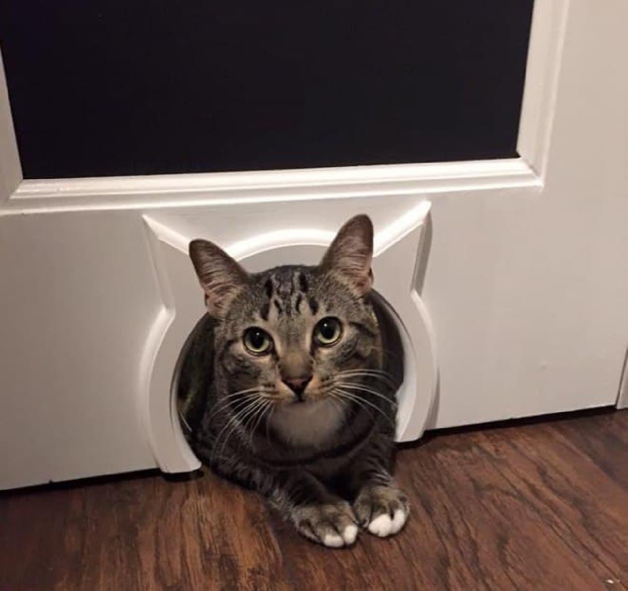 ドアにネコ専用出入り口を作る「Kitty Pass」