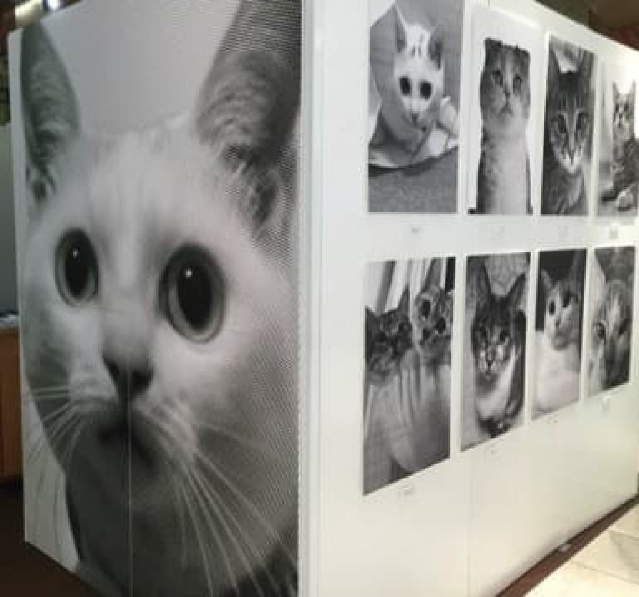 「Cat's Poster Project」