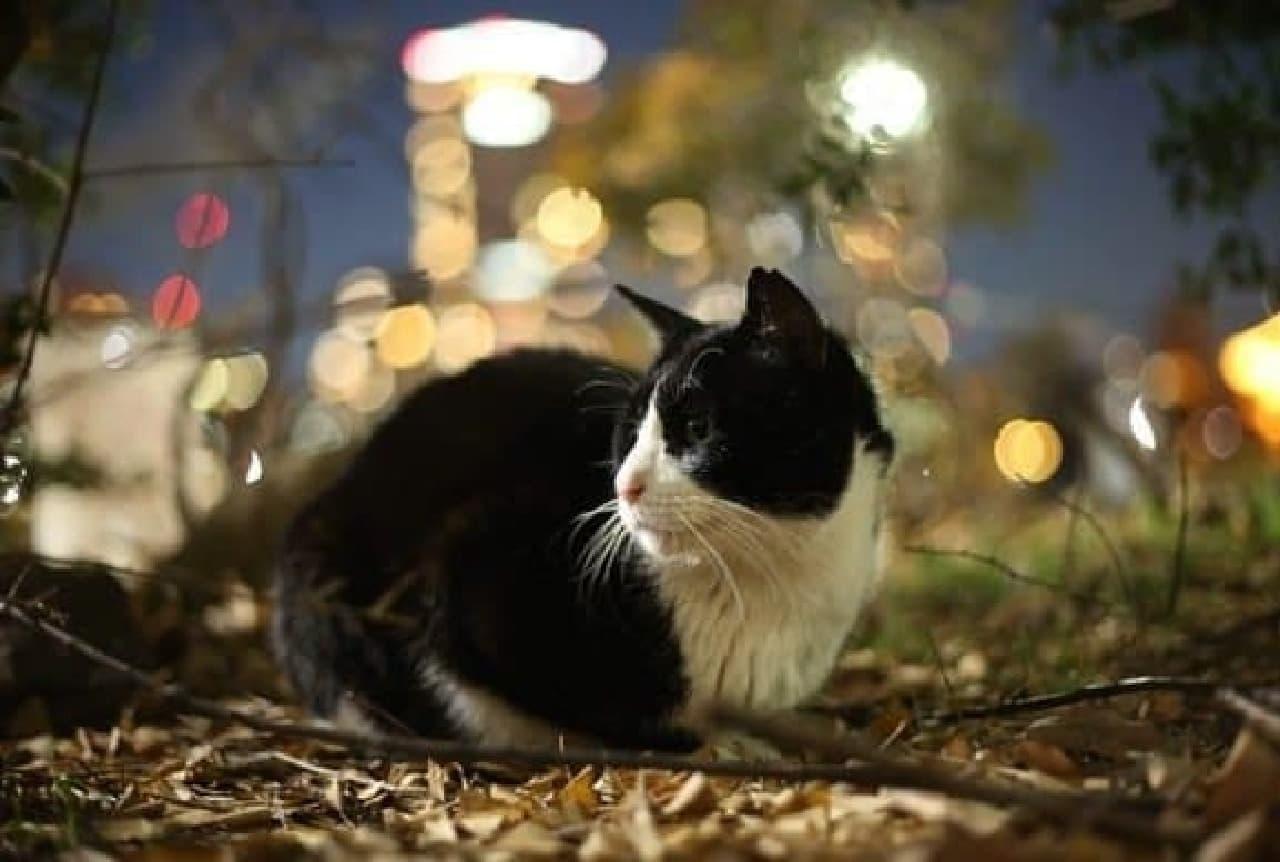 ネコ写真家沖昌之さん作品例