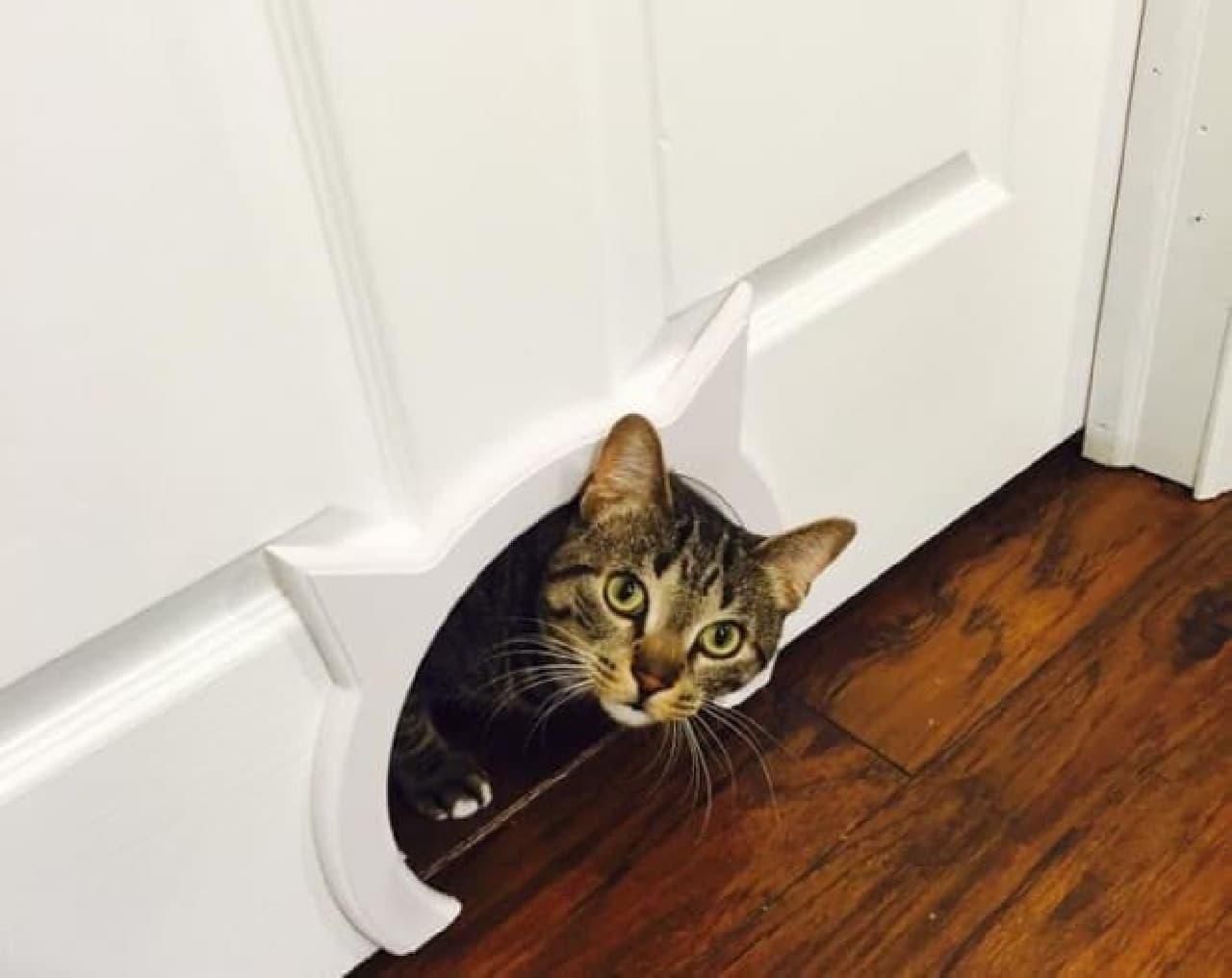 ドアにネコ専用出入り口を作る「Kitty Pass(子ネコの小道)」